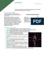 Anatomia 1 c