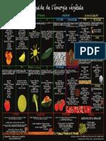 Petit Guide Vegetal