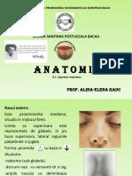 Anatomie12