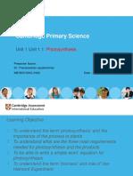 PDF Photosynthesis