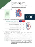Evaluación de Sistema Circulatorio y Respiratorio