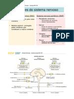Embriologia Do Sistema_Nervoso