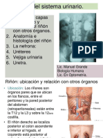 aparato_urinario-2017