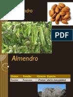 Almendro 2017