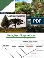 Gimnospermas-P1