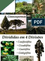 Gimnospermas-P2