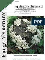 125_Hydnopolyporus-fimbriatus