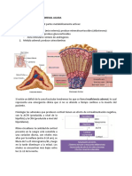 17. Insuficiencia Adrenal Aguda