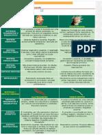 Tabela de Biologia - Anatomia Comparada