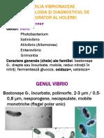 Familia Vibrionaceae 17-1063