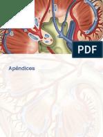 Orientação nutricional DRC - Riella e Martins.pdf-1