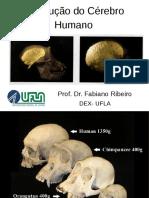 evol-cerebro-parte2.pdf