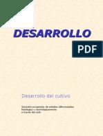 Clase1_parte2_Desarrollo