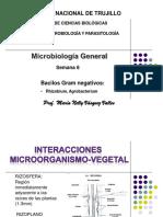 Rhizobium, Agrobacterium