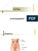 Renal System Cystogram