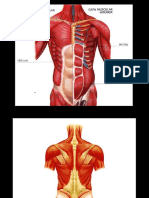 Musculos Tronco Mmii