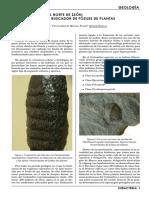 fosiles leon.pdf