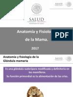 Anatomía y Fisiología de La Mama