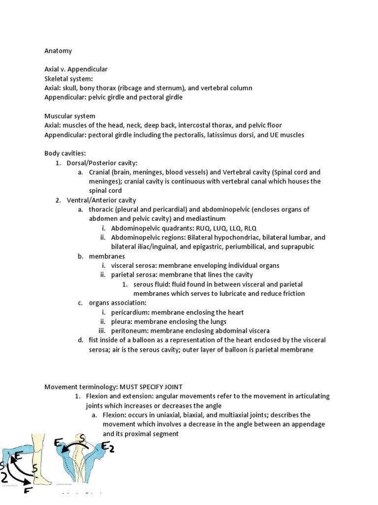 Zoo4733 Exam 1 Review Epithelium Anatomical Terms Of Motion