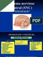 Sistema.nervioso.central