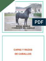 Manual sobre el caballo.pdf