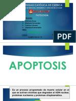 Patologia Apoptosis
