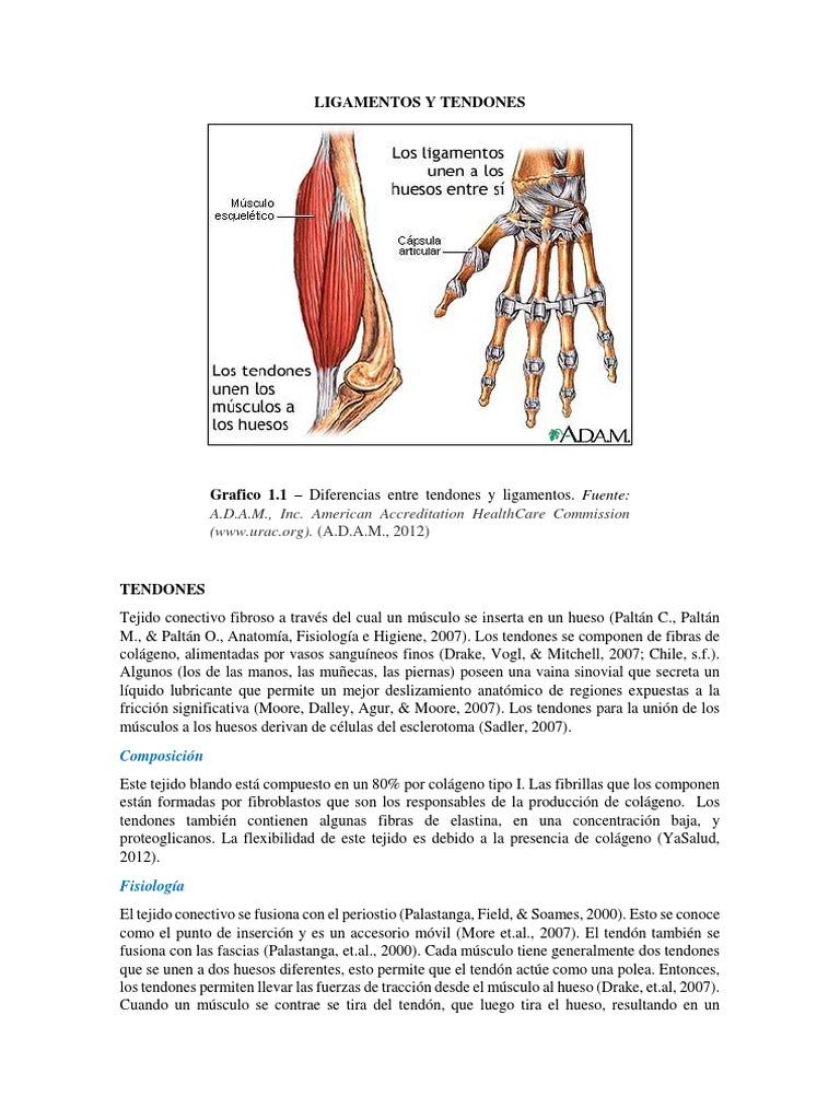 Ligamentos y Tendones