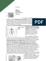 transcri cardio 1-2