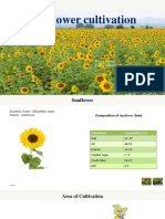 sunflowercultivation-131219231151-phpapp02