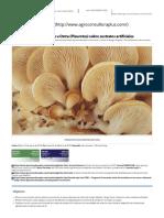 Cultivo de Hongos Pleurotus o Gírgolas __ Curso Online Tutoreado _ ACP Agroconsultora Plus