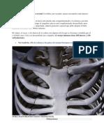 Constitucion Anatomica