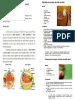 protocolo exp observação de celulas ao MO.docx
