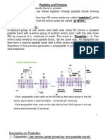 Primary, Secondary, Tertiary and Quaternary Structures of a Protein