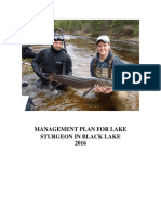 Black Lake lake sturgeon Management Plan
