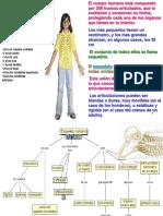 Sistema Óseo Humano
