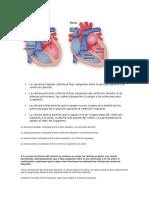 La Válvula Tricúspide Controla El Flujo Sanguíneo Entre La Aurícula Derecha y El Ventrículo Derecho