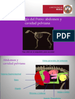 Abdomen ARP.pps