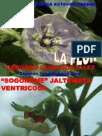7. Flor Perianto