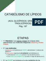 7catabolismo de Lípidos