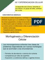 4. Morfogenesis y Diferenciacion Celular