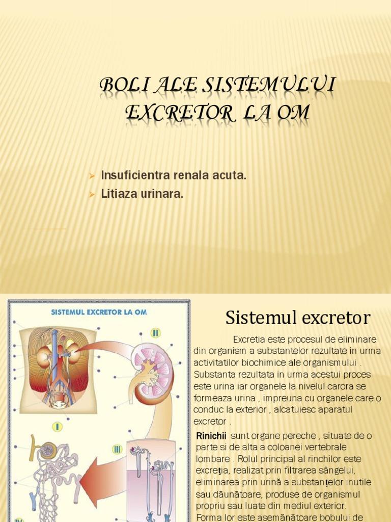 Bolile Sistemului Excretor | PDF