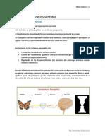 Resumen Neurobiología de Los Sentidos -Neurociencia I