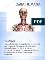 Anatomia Humana- Planimetria