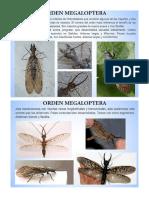 Capitulo X Sistemática - Megaloptera - Stresiptera.pdf