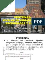 2.Niveles de Organización de Las Proteínas
