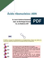 4.ARN.ppt