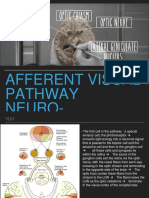 Afferent Visual Pathways of Neuro-ophthalmology - Ihsan