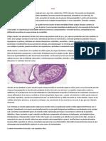 Cuello Patologia