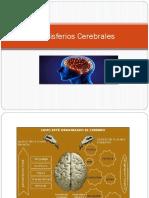 Hemisferios Cerebrales Con Lobuloss Bien Especificado
