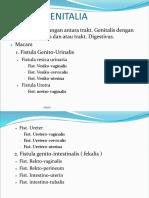 Fistula Genitalia